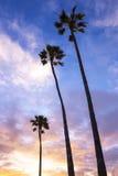Palmen am Sonnenuntergang Stockfoto