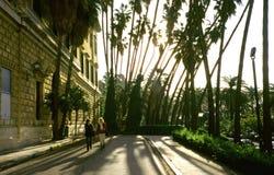 Palmen in Spanje Royalty-vrije Stock Afbeelding