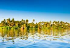 Palmen, Sri Lanka Stockbild