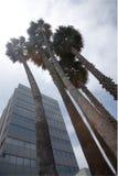 Palmen in Stad Royalty-vrije Stock Afbeeldingen
