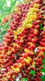 Palmen-Startwert für Zufallsgenerator Farbe hat Änderung an grünem gelb-orangeem und rot Lizenzfreies Stockfoto