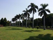 Palmen in Steeg Stock Afbeelding