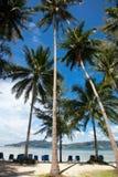 Palmen, strand en ligstoelen Stock Fotografie