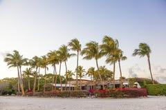 Palmen am Strand in Miami, Florida Stockbilder
