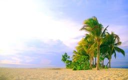 Palmen in Strand op een Blauwe Hemel Stock Afbeeldingen