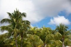 Palmen tegen blauwe betrokken hemel Stock Foto