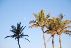 Palmen tegen blauwe hemel Royalty-vrije Stock Fotografie