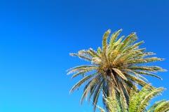 Palmen tegen blauwe hemel Stock Foto