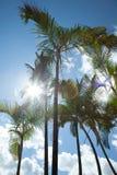 Palmen tegen blauwe hemel Stock Afbeeldingen