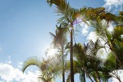 Palmen tegen blauwe hemel Royalty-vrije Stock Foto's