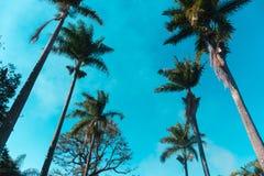 Palmen tegen blauwe hemel worden opgesteld die Stock Afbeelding