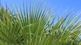 Palmen tegen de blauwe hemel stock videobeelden