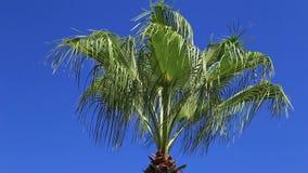 Palmen tegen de blauwe hemel stock video