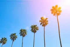 Palmen tegen de blauwe hemel royalty-vrije stock foto's