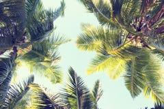 Palmen tegen de blauwe hemel Stock Foto's