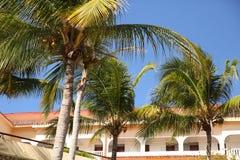 Palmen tegen de blauwe hemel en het hotel royalty-vrije stock foto
