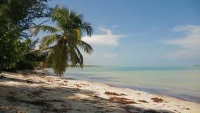 Palmen tegen de blauwe hemel met witte wolken stock videobeelden