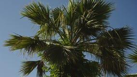 Palmen tegen de blauwe hemel met witte wolken stock video
