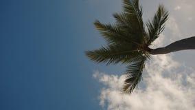 Palmen tegen de blauwe hemel met witte wolken stock footage