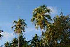 Palmen tegen de blauwe hemel stock foto