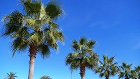 Palmen tegen de blauwe hemel in de toevluchtstad stock footage