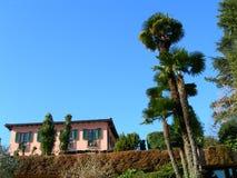 Palmen tegen duidelijke blauwe hemel royalty-vrije stock foto