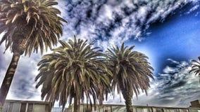 Palmen tegen een blauwe hemel Stock Foto's