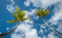 Palmen tegen een blauwe hemel Royalty-vrije Stock Fotografie