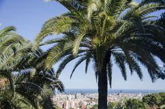 Palmen tegen een blauwe hemel en de bouw met dunne wolken in Barcelona, Spanje Mooie blauwe zonnige dag Palmen binnen Royalty-vrije Stock Foto's