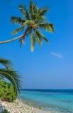 Palmen tegen een blauwe hemel Mooie palmen tegen blauwe zonnige hemel Palmen op hemelachtergrond Royalty-vrije Stock Foto's