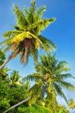Palmen tegen een blauwe hemel Mooie palmen tegen blauwe zonnige hemel Palmen op hemelachtergrond Royalty-vrije Stock Afbeelding