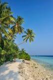 Palmen tegen een blauwe hemel Mooie palmen tegen blauwe zonnige hemel Palmen op hemelachtergrond Stock Afbeeldingen