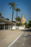 Palmen tegen een blauwe hemel in Sevilla, Spanje, Europa met Torr Royalty-vrije Stock Foto's