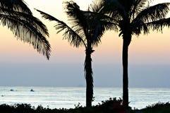 Palmen tegen een dageraadhemel die worden gesilhouetteerd Stock Fotografie