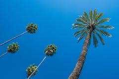 Palmen tegen een diepe blauwe hemel Stock Afbeeldingen