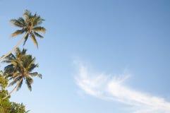 Palmen tegen een mooie duidelijke hemel Stock Foto's