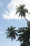 Palmen tegen een mooie duidelijke hemel Royalty-vrije Stock Foto's