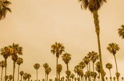 Palmen tegen een oranje overzeese hemel stock fotografie