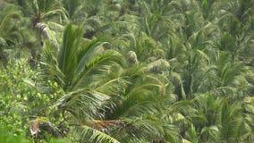 Palmen tegen hemel of overzees 1 stock footage
