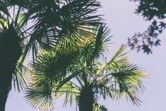 Palmen tegen lavendelhemel Royalty-vrije Stock Fotografie