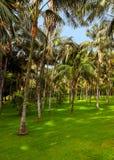 Palmen in Tenerife - Canarische Eilanden Royalty-vrije Stock Afbeelding