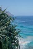 Palmen-Tipps und blauer Ozean stockfotografie