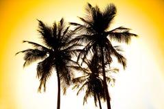 Palmen. Tropisch bos. Het Park van Tayrona, Colombia Stock Foto's