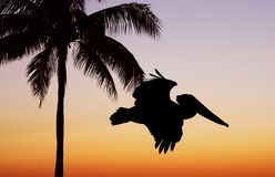 Palmen-u. Pelikan-Sonnenuntergang Lizenzfreies Stockfoto