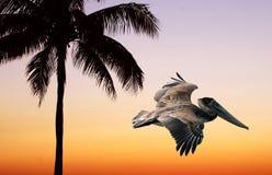 Palmen-u. Pelikan-Sonnenuntergang Stock Abbildung