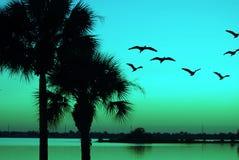 Palmen-u. Pelikan-Sonnenuntergangs-Grün Stockfotografie