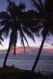 Palmen u. Sonnenuntergang Stockbild