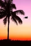 Palmen-u. Vogel-Sonnenuntergang Lizenzfreie Stockfotografie