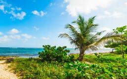 Palmen in Ufer Autre Bord an einem bewölkten Tag stockbild