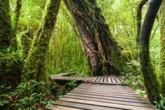 Palmen und alles das Holzbrücke am nebelhaften tropischen Regenwald Lizenzfreie Stockfotos